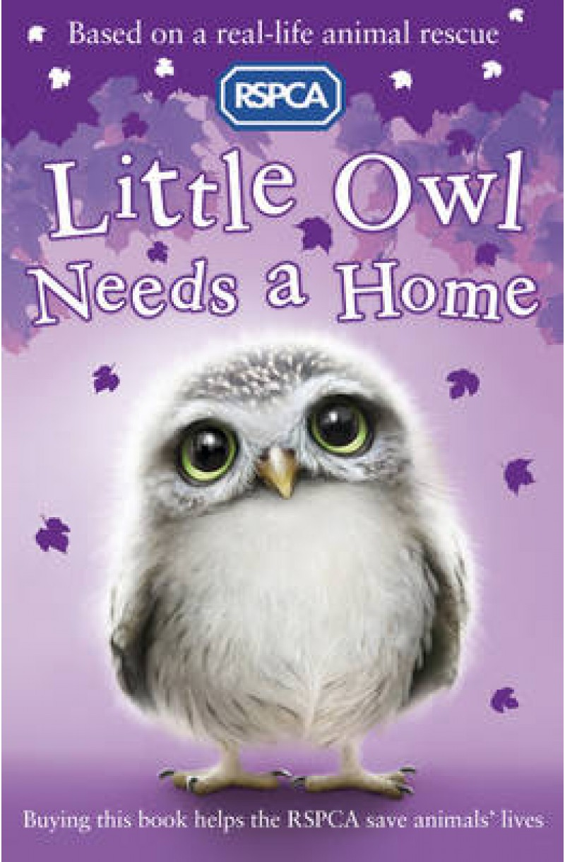 Little Owl Needs a Home (RSPCA)