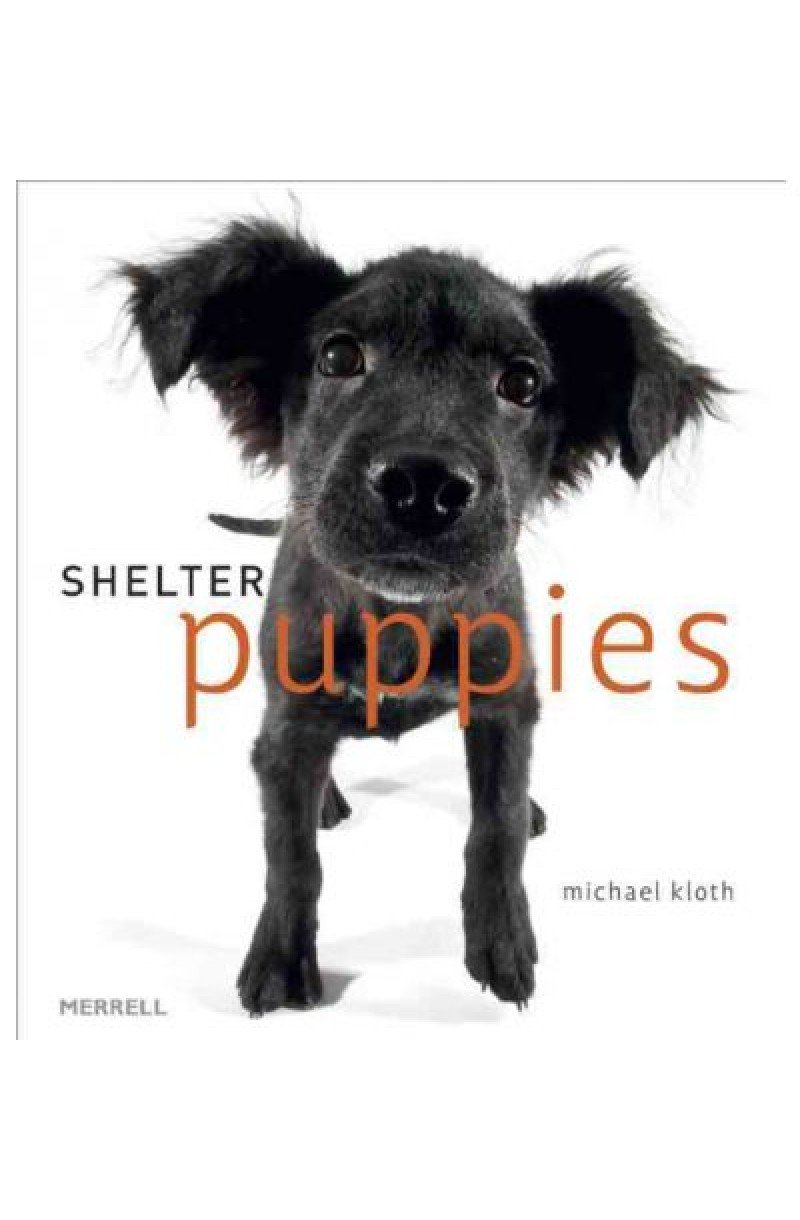 Shelter Puppies